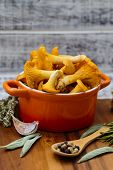 foto of chanterelle mushroom  - Chanterelle - JPG