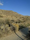 picture of boise  - Autumn finds the plants and foothills near Boise - JPG