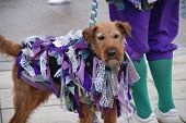 HASTINGS, ENGLAND - MAY 4: A decorated dog belonging to Morris dancers performing on the seafront du