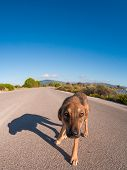stock photo of stray dog  - Stray dog on the road on a sunny day - JPG