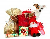image of jack-in-the-box  - Holiday gift boxes decorated Gift boxes with cute little dog isolated on white background - JPG
