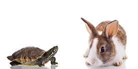 stock photo of the hare tortoise  - Cute Bunny and Turtle isolated on white background - JPG