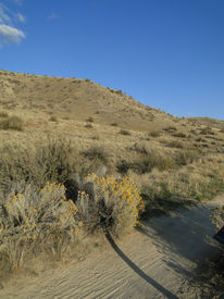 image of boise  - Autumn finds the plants and foothills near Boise - JPG