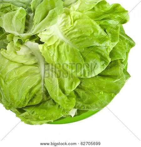 Fresh Lettuce Salad Leaves in Plate , border top view,Isolated On White Background