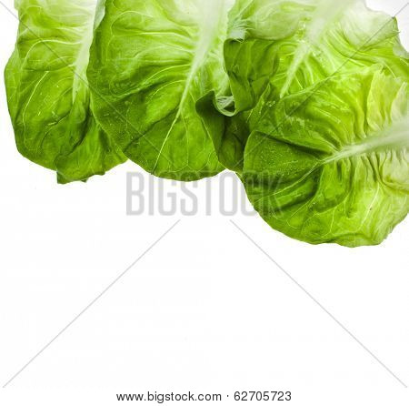 Border of Fresh Lettuce Salad Isolated On White Background