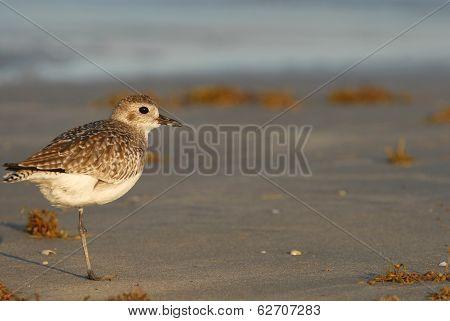 Texas Gulf Coast Birding