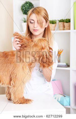 Beautiful young female veterinarian examining dog in clinic