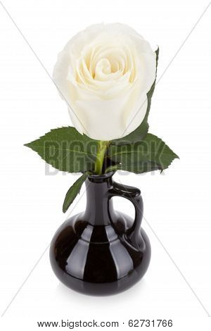 Amazing White Rose In Black Vase Isolated On White Background