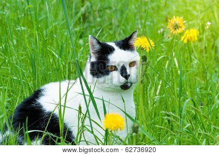 Cat Enjoys Springtime On Garden