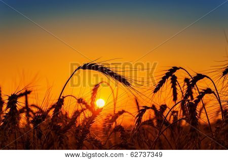red sunset over field with harvest