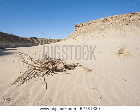 Small Dead Desert Bush On A Sand Dune Slope
