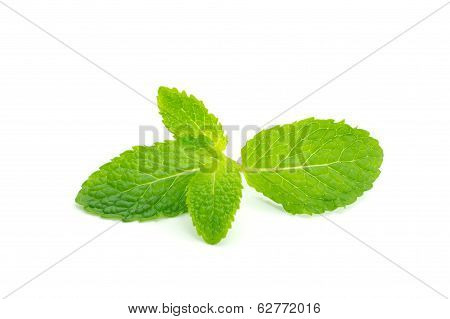 Fresh mint leaves close up on white