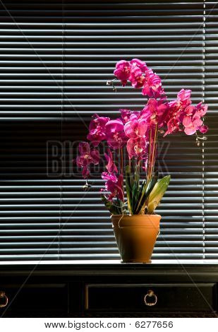 Potted Orchid On Table