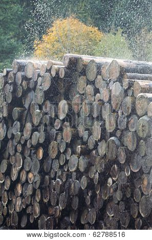 Water Spraying Cut Trunks In A Sawmill, France