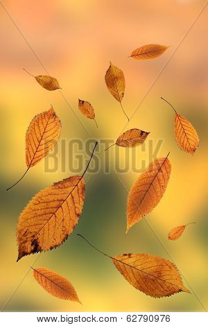 Brown Leaves In Autumn Season