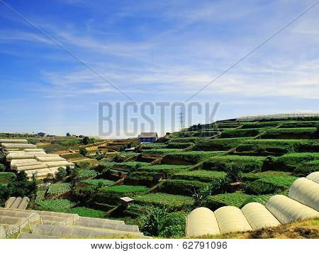 Agricultural fields on the terraces in the mountains