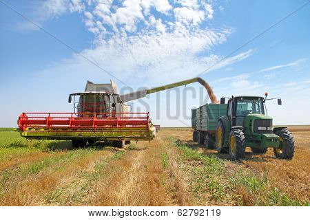 Combine loading wheat grain