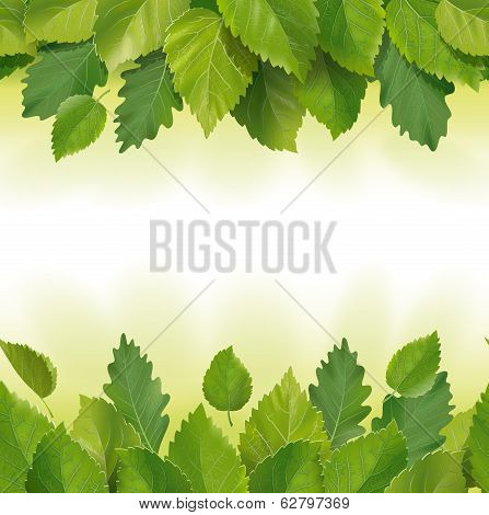 Composition of the leaves (birch, oak)