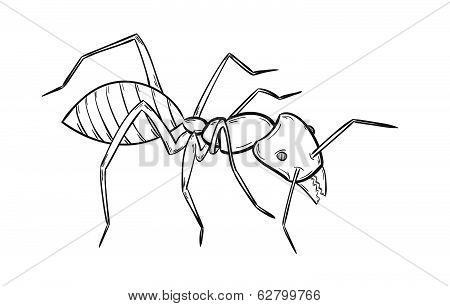 Sketch Of The Ant
