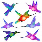 Set of isolated Humming birds