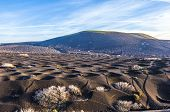 picture of volcanic  - Landscape La Geria in Lanzarote a Wine area on volcanic ashh - JPG
