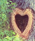a heart shaped hollow hole in a tree trunk
