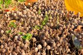pic of penicillium  - scene timber mushrooms as illustration autumn harvest - JPG