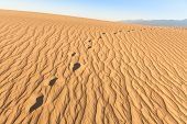 pic of mesquite  - Sand dunes of Mesquite Flat in Death Valley Desert  - JPG