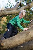 Boy Carefully Climbing Tree