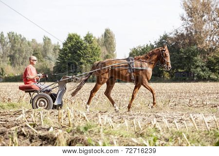 Horse Being Trained For Racing