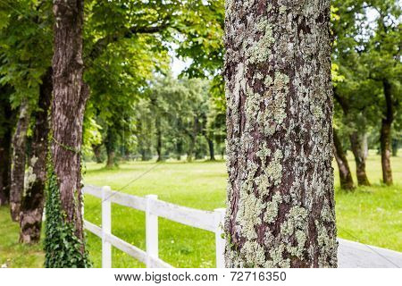 Trees With White Fence