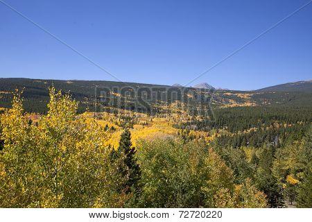 Rocky Mountain Fall Aspen Scene