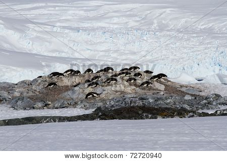 Small Colony Of Adelie Penguins Among The Rocks And Snow On The Antarctic Island