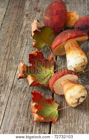 Ceps And Maple Leaves Scattered