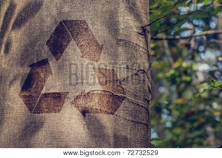 Recycling Symbol On The Trunk Of A Tree