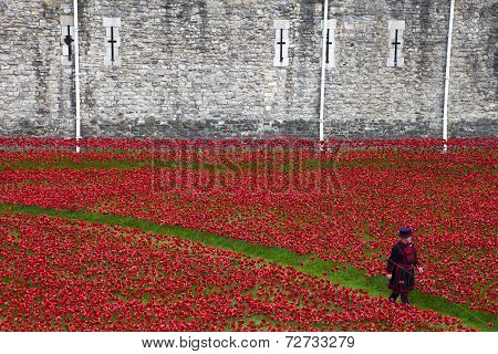 Yeomen Warder Amongst Poppies At The Tower Of London