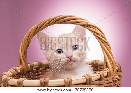 little kitten in the basket