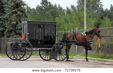 Patient Amish Horse with parked buggy