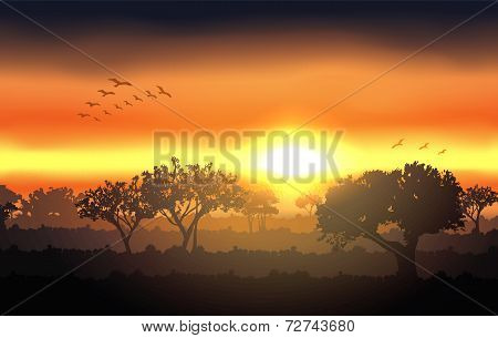 Vector sunset landscape with tree silhouette