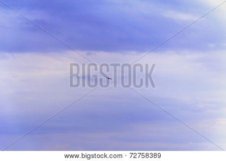 Bird High In The Blue Sky