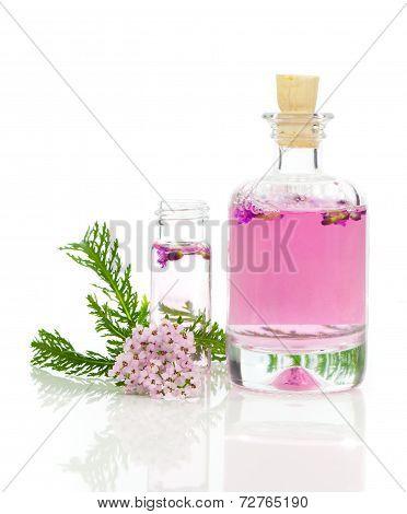Yarrow Herbal Tincture, With Fresh Flowers Achillea Millefolium.