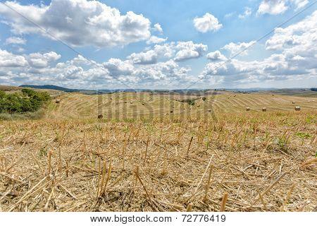 Tuscany Farmland