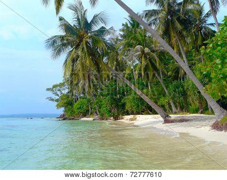Palmtree Beach