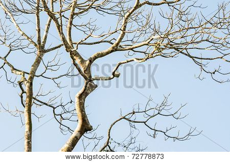 Naked Branches Of A Tree