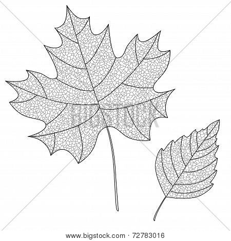 Vector Collection of Leaf Silhouettes with thin veins.