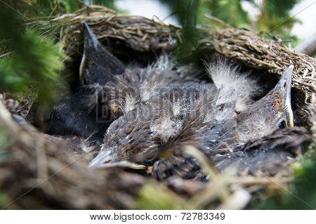Cuddling Birds In Nest Looking Around