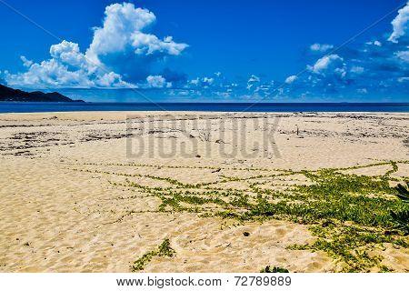 Sand, creeper and sea