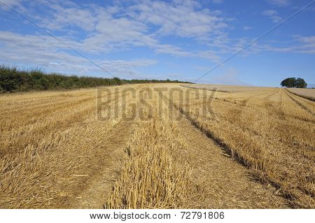Harvested Field In Summer