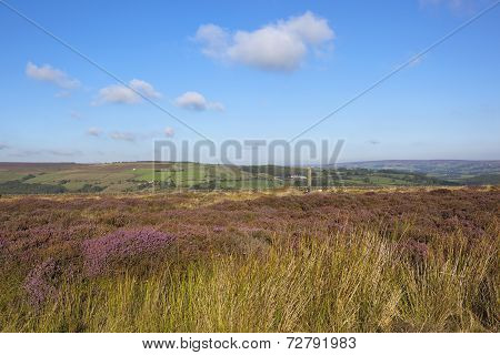 Heather And Standing Stone