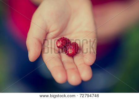 Young Child Holding Two Ripe Red Strawberries